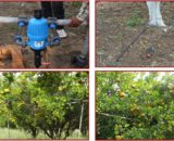 FRUIT TREE YOUNG SCHEDULE