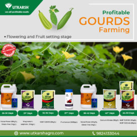 Gourd Production - Flowering & Fruit Setting Stage