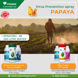 Papaya Production - Virus Prevention Spray within first 7 days