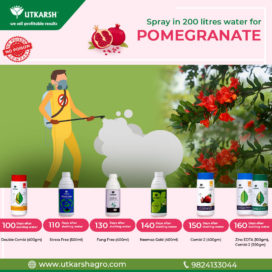 Pomegranate Production-Spray Schedule during Fruit Size formation and maturity - 100 to 160 days