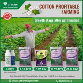 Cotton cultivation growth stage